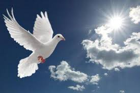 The Dove